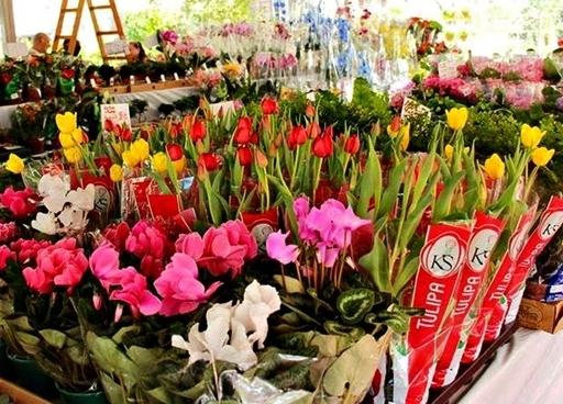 Flores de Holambra.jpg