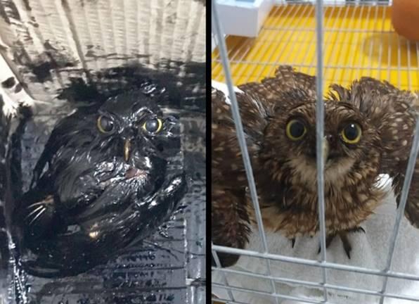 Animal sujo de óleo.jpg